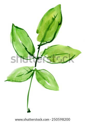 Green leaf. Watercolor. - stock photo