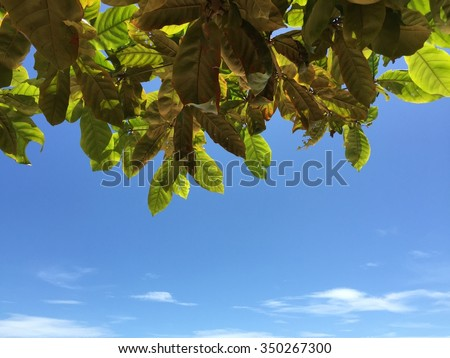 Green leaf with blue sky.