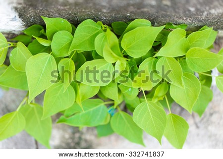 Green leaf with concrete background.