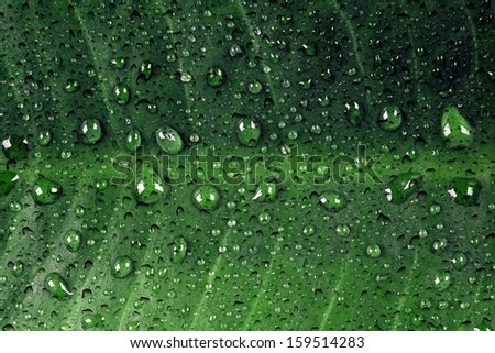 Green leaf with dewdrops
