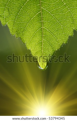 Green leaf with drop of water. Macro close-up. - stock photo
