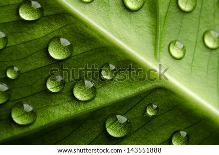 Green leaf with drops of water - stock photo