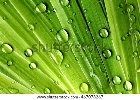 green leaf with drops of water,Closeup