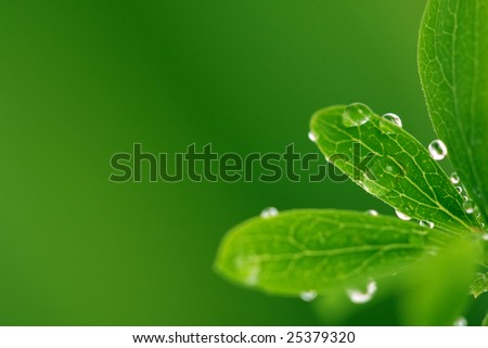 Green leaf with drops, on green background