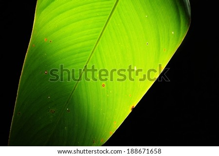 Green leaf with shadow background - stock photo