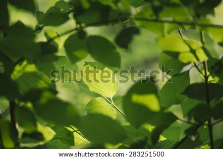 Green leaf with shallow depth of field - stock photo