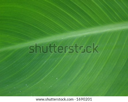 Green Leaf With tiny water drops