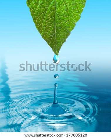 green leaf with water drop ans splash isolated o white - stock photo
