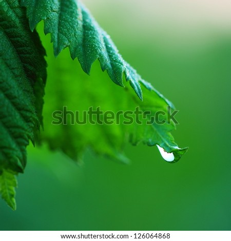 green leaf with water drop. macro
