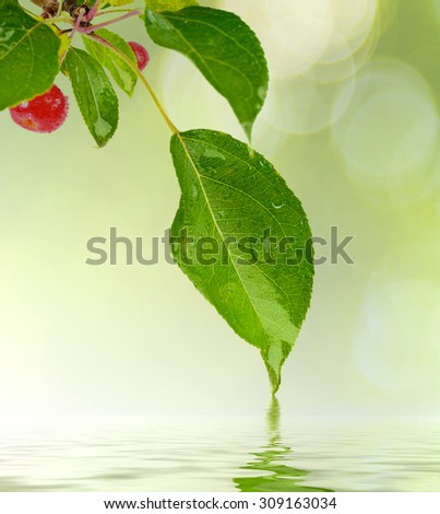 green leaf with water drop water on sunny background - stock photo