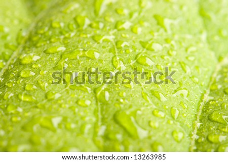 Green leaf with water droplets macro - shallow depth of field