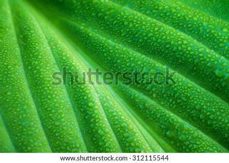 Green leaf with water drops - stock photo
