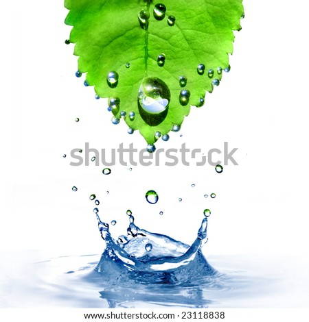 green leaf with water drops and splash isolated on white - stock photo
