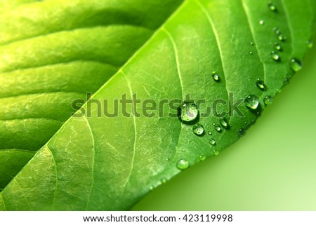 green leaf with water drops background