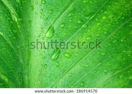 Green leaf with water drops close-up as background.
