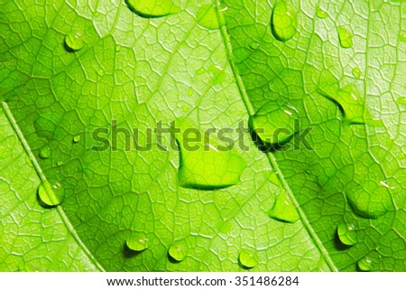 Green leaf with water drops,closeup, macro - stock photo