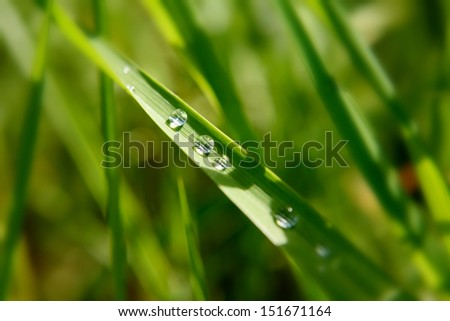 Green leaf with water drops, Good for issues such as environment, ecology and Pollution. - stock photo