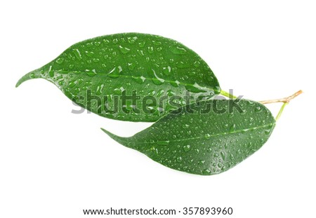 Green leaf with water drops isolated on white