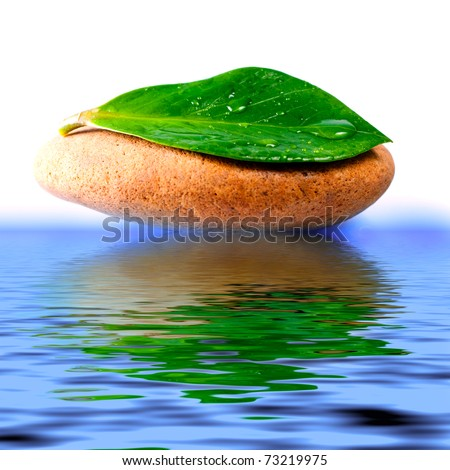 Green leaf with water drops, reflected in the water - stock photo