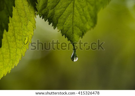 Green leaf with waterdrop - pure nature concept. - stock photo