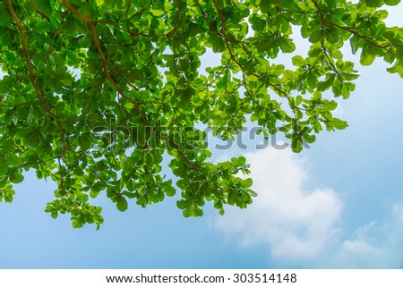 green leafs and blue sky on sunny day, concept colorful day from ant view