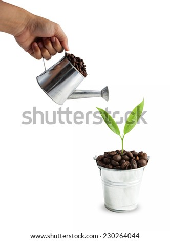 Green leafs and coffee beans isolated on white background