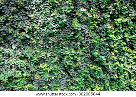 green leafs for background, - stock photo