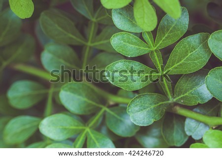 Green leafs low key dark tone nature background