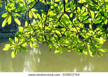 Green leafs on sun light in park - stock photo
