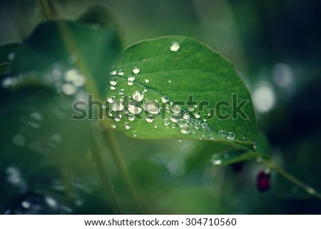 Green leafs with dew drops. - stock photo