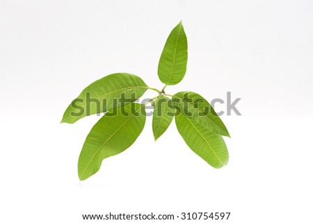 Green, leafy branch on white background