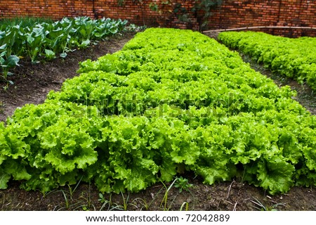 Green leafy vegetables health food. - stock photo