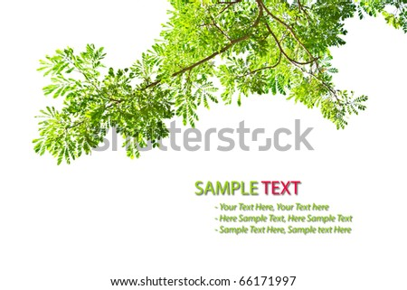 green leave frame isolated on white background - stock photo