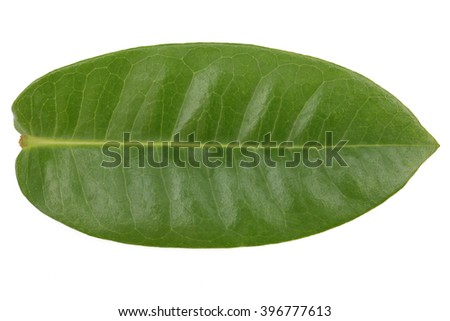 Green leave isolated on white background. This has clipping path.