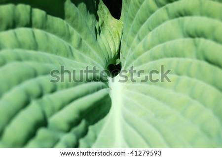 Green leave macro - stock photo