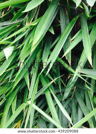 Green leave of bamboo - stock photo