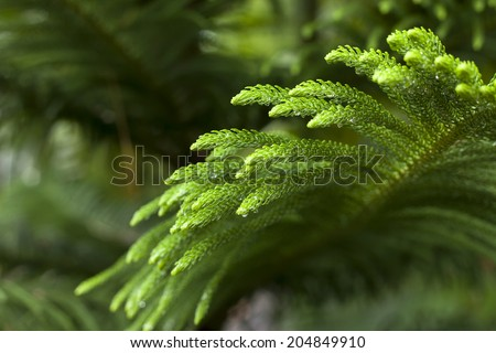 green leave rainforest