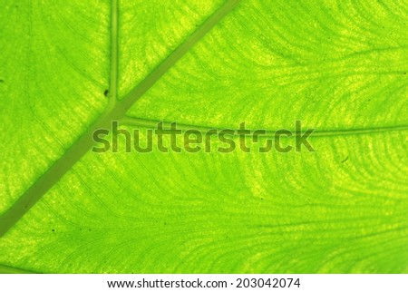 green leave texture - stock photo