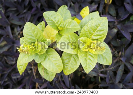 Green leave with purple background - stock photo