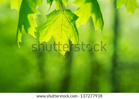 green leaves abstract - stock photo