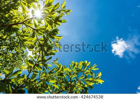 Green leaves against blue sky - stock photo
