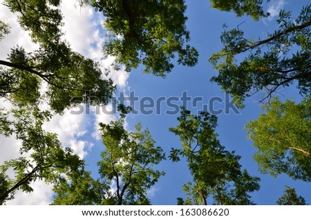 Green Leaves against the Sky - stock photo