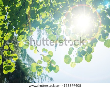 Green Leaves against the sky and sun. - stock photo