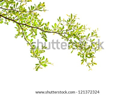 green leaves and branches on white background - stock photo
