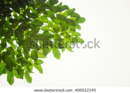 green leaves and branches on white background for abstract texture environment nature love earth concept for design and decoration - stock photo