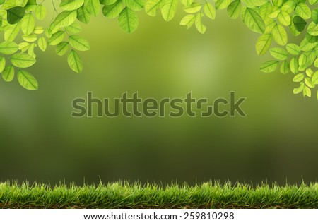 Green leaves and Green grass  border on the blurred background