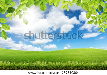 Green leaves and green grass with sky background - stock photo