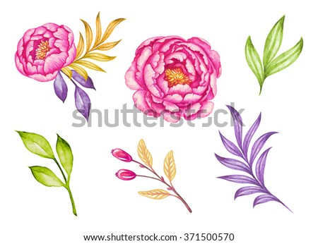 green leaves and pink peony flowers watercolor illustration, floral design elements isolated on white background - stock photo