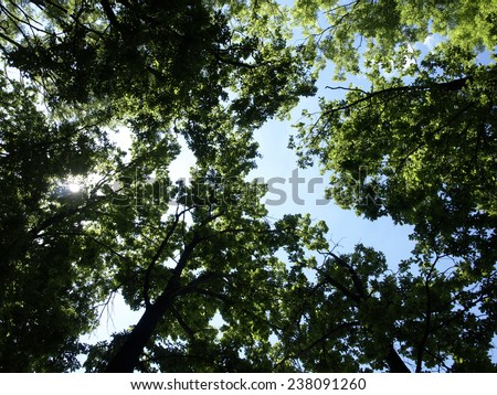 Green leaves and sky background - stock photo