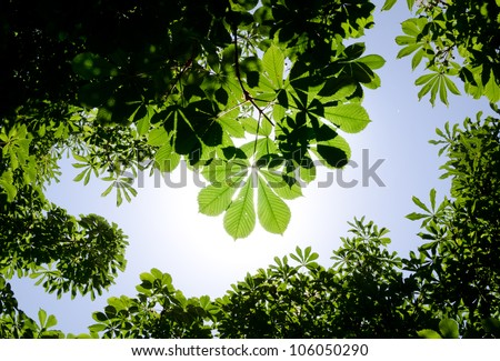 Green leaves and sun - stock photo